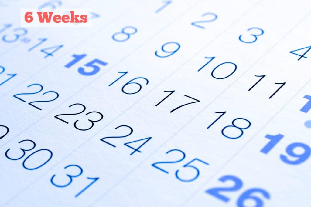 Calendar 6 Weeks